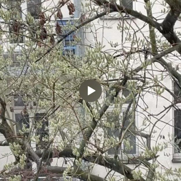 Berlin April
